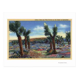 Opinión de las yucas y de flores salvajes del tarjetas postales