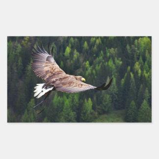 Opinión de ojo de Eagle Rectangular Altavoces