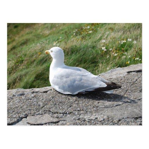 Opinión de ojo de pájaros postales