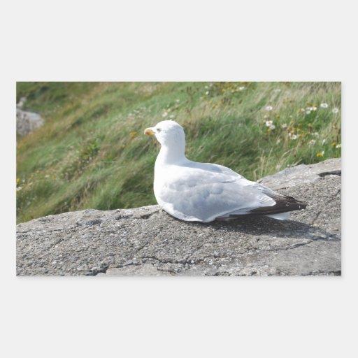 Opinión de ojo de pájaros rectangular pegatina