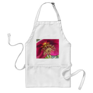 Opinión del ojo de la abeja de un flor del Hellebo Delantal