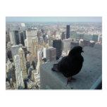Opinión del ojo de pájaro de la postal de Nueva Yo