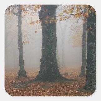 Opinión del otoño del bosque de niebla, abuelo 2 pegatinas cuadradas personalizadas