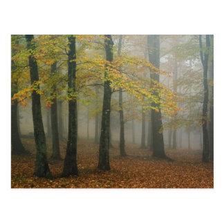 Opinión del otoño del bosque de niebla, abuelo 3 tarjeta postal