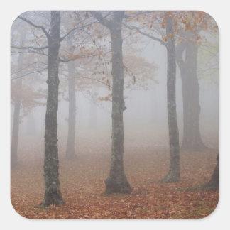 Opinión del otoño del bosque de niebla, abuelo calcomania cuadradas personalizadas