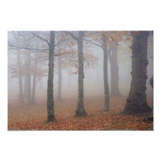 Opinión del otoño del bosque de niebla, abuelo foto