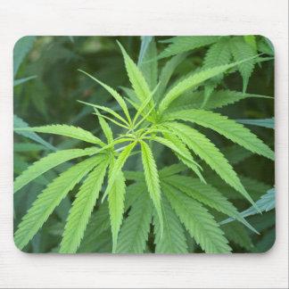 Opinión del primer de la planta de marijuana, mouse pad