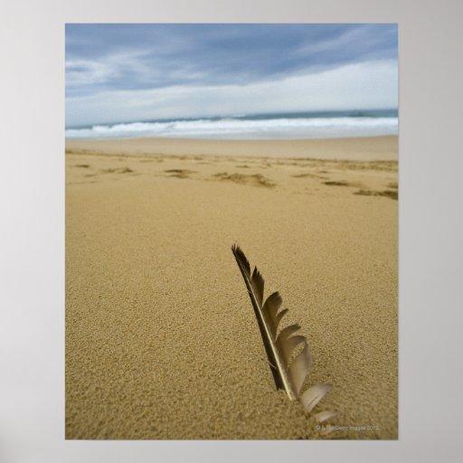 Opinión del primer de la pluma de pájaro en arena póster