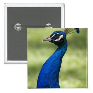 Opinión del primer el pavo real jardines botánico
