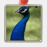 Opinión del primer el pavo real, jardines ornamento para reyes magos
