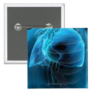 Opinión del tres cuartos del corazón y de los pulm
