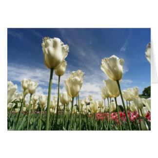 Opinión del tulipán tarjeta de felicitación
