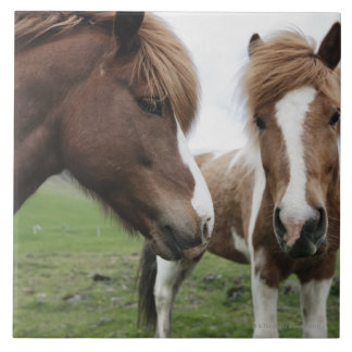 Opinión el caballo, primer azulejo cuadrado grande