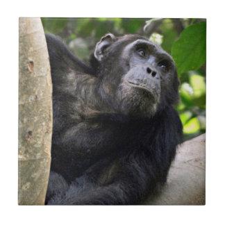 Opinión el chimpancé (trogloditas de la cacerola) azulejos