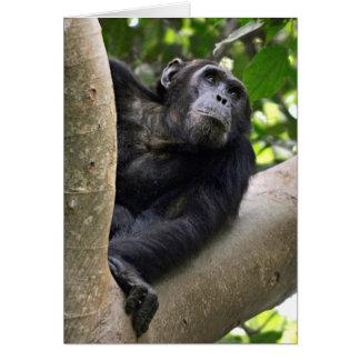 Opinión el chimpancé (trogloditas de la cacerola) tarjeta de felicitación