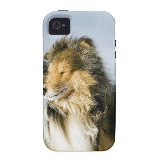 Opinión el perro pastor de Shetland Vibe iPhone 4 Carcasas
