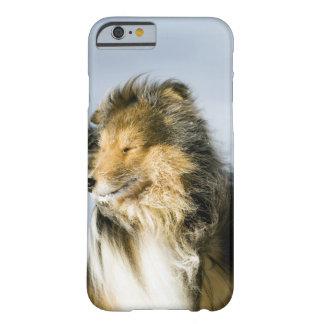 Opinión el perro pastor de Shetland Funda De iPhone 6 Barely There
