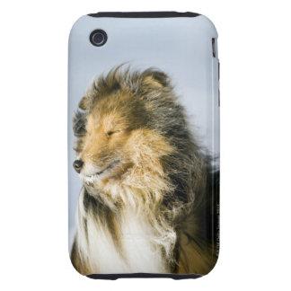 Opinión el perro pastor de Shetland iPhone 3 Tough Protector