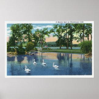 Opinión escénica cisnes en el lago posters