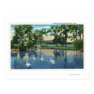Opinión escénica cisnes en el lago tarjetas postales