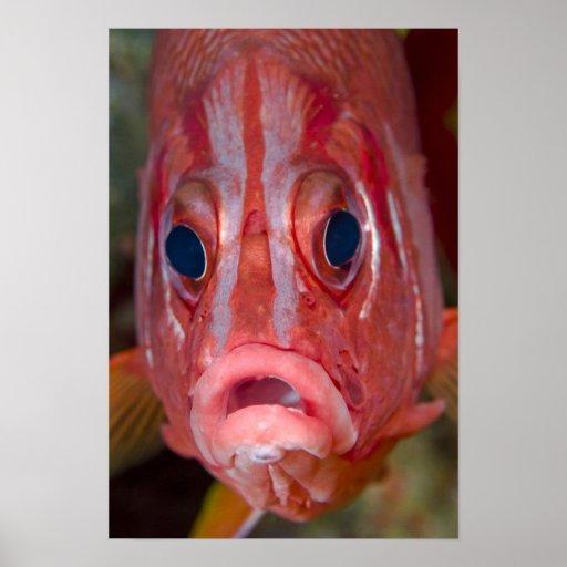 Opinión frontal del primer el squirrelfish colorid impresiones