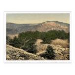 Opinión general los cedros de Líbano, Líbano, Ho Postales