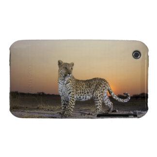 Opinión integral el leopardo (pardus del Panthera) iPhone 3 Case-Mate Protector
