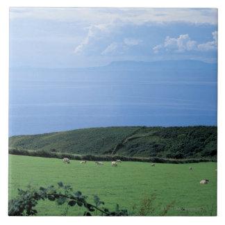 opinión las ovejas que pastan en la ladera enorme azulejo cuadrado grande