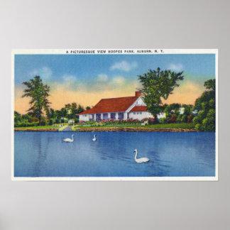 Opinión los cisnes del parque de Hoopes en el lago Posters