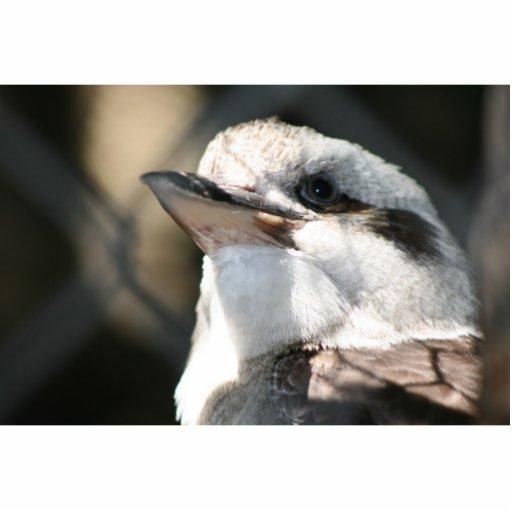 opinión marrón y blanca de la cabeza del pájaro escultura fotografica