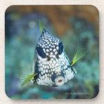 Opinión subacuática el Trunkfish liso (Lactophrys Posavasos De Bebidas