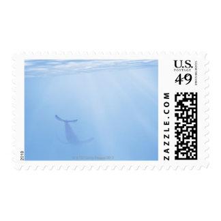 Opinión subacuática la ballena