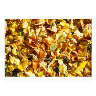 Opinión superior el tilo caido de las hojas de tarjetas postales