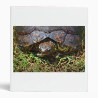 Opinión superior saturated.jpg de la tortuga adorn