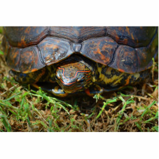 Opinión superior saturated.jpg de la tortuga adorn escultura fotográfica