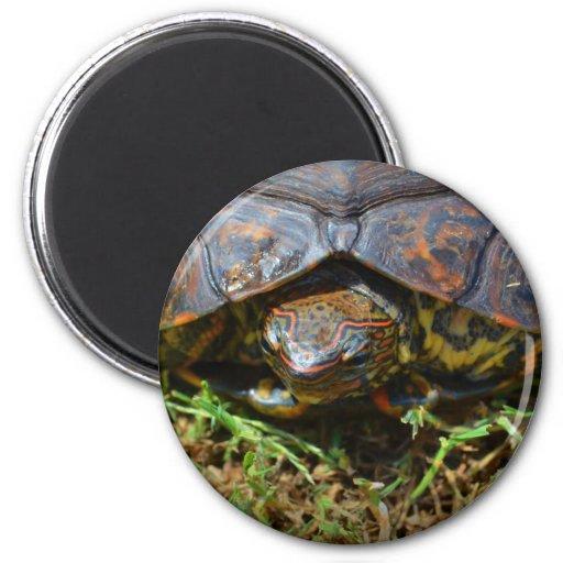 Opinión superior saturated.jpg de la tortuga adorn iman para frigorífico