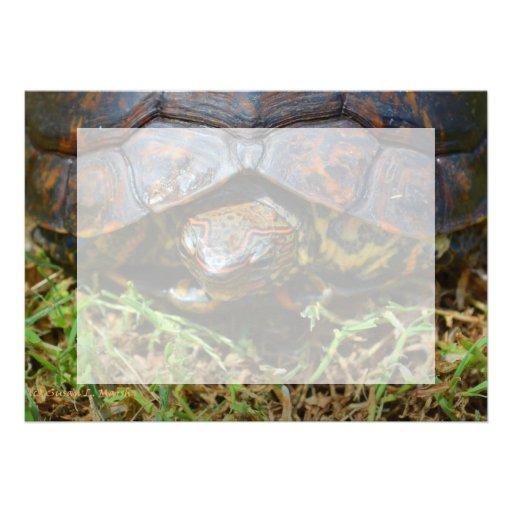 Opinión superior saturated.jpg de la tortuga adorn invitaciones personales