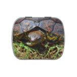 Opinión superior saturated.jpg de la tortuga adorn latas de caramelos