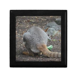 opinión trasera del wallaby que mira sobre animal caja de recuerdo
