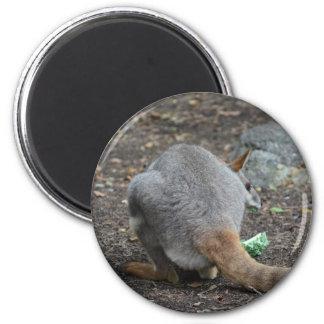 opinión trasera del wallaby que mira sobre animal imán para frigorifico