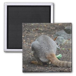 opinión trasera del wallaby que mira sobre animal imán