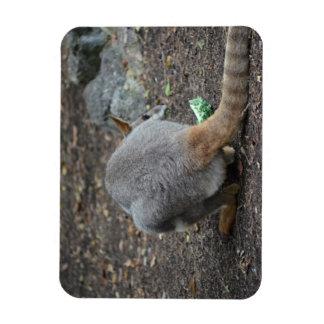 opinión trasera del wallaby que mira sobre animal iman