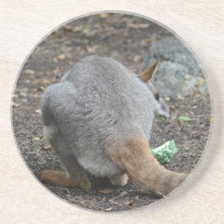 opinión trasera del wallaby que mira sobre animal posavasos cerveza