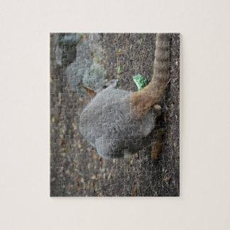 opinión trasera del wallaby que mira sobre animal puzzles