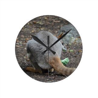 opinión trasera del wallaby que mira sobre animal reloj de pared