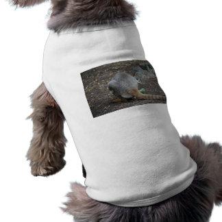 opinión trasera del wallaby que mira sobre animal ropa de perro