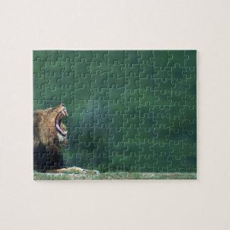 Opinión un león (Panthera leo) que abre su boca Puzzle