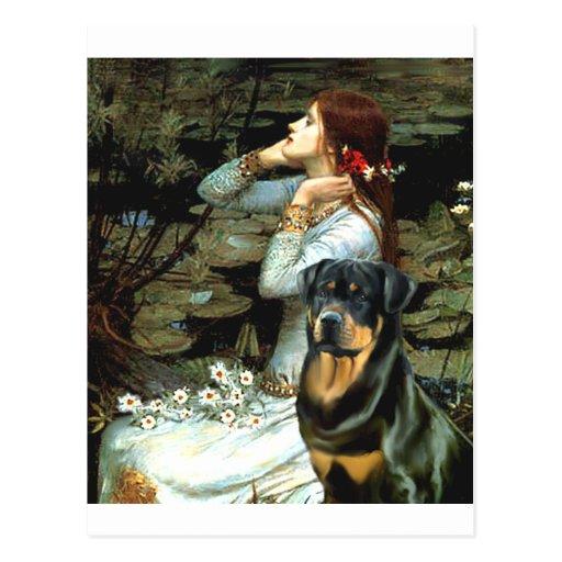 Opohelia asentó - Rottweiler Tarjetas Postales