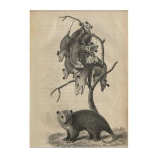 Opossum Acrylic Wall Art