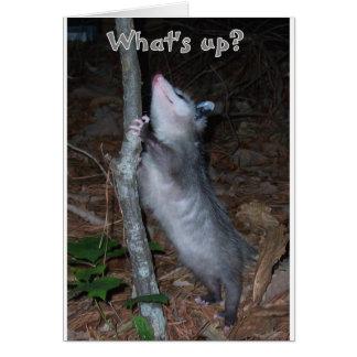 Opossum Greeting Cards
